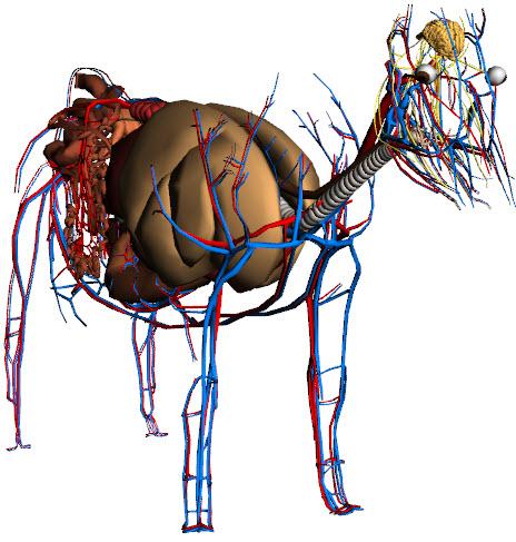 Google Cow дает возможность наглядно изучать анатомию коровы