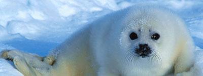 Путешествие за полярный круг