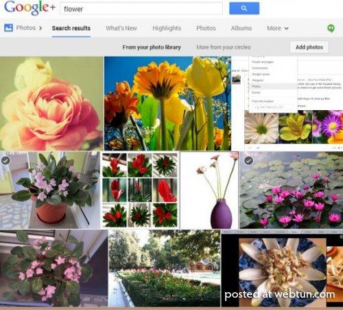 ВGoogle+ Фото появился поиск изображений сраспознаванием