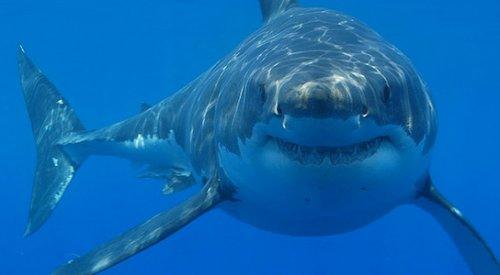 Google защитит подводный кабель FASTER от нападений акул
